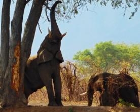 Ζάμπια: Ένα άλλο είδος Αφρικής